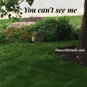 #inspiration, protection, nature, rabbit