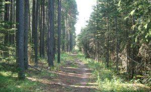 #inspiration, nature, path,