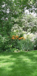 garden, weeds,